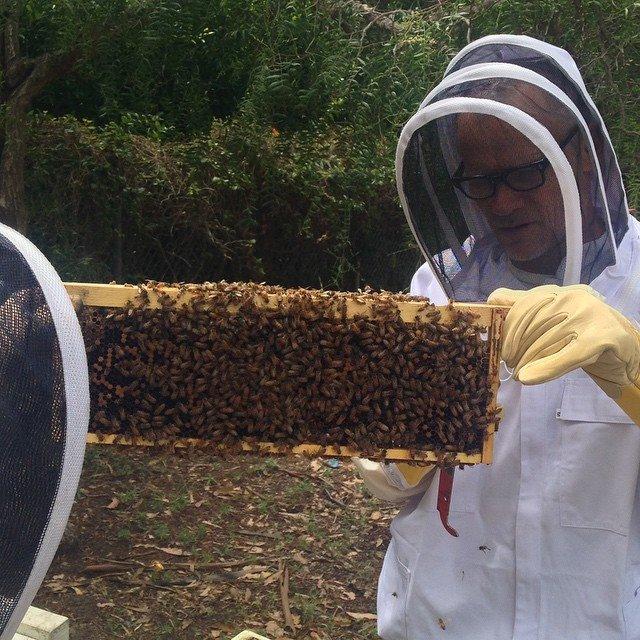 Flea e seu novo trampo com as abelhas