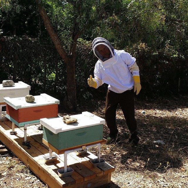 Flea trabalhando com as abelhas