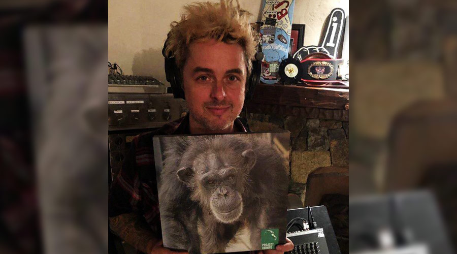 Billie Joe Armstrong, do Green Day, pede ajuda para defender chimpanzés