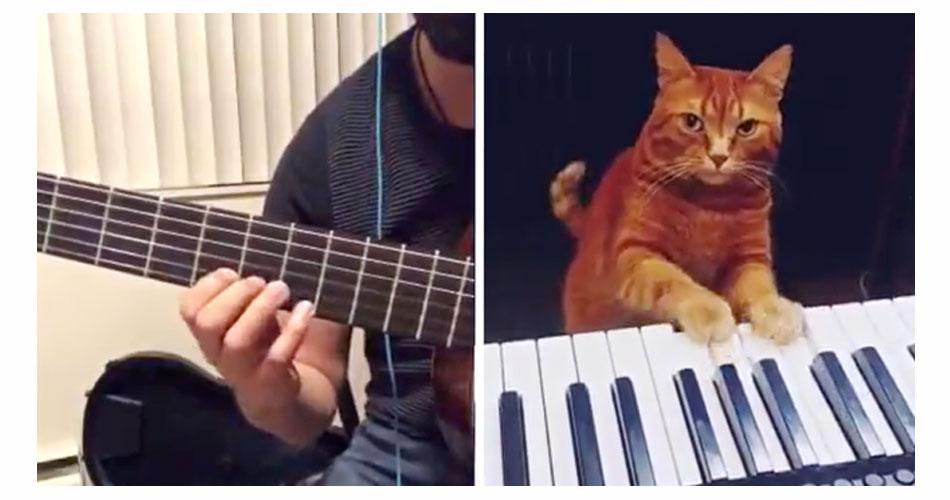 Dueto de músico com gato pianista viraliza na internet